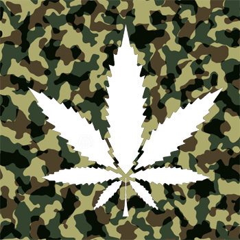 Culture du cannabis en Guerilla