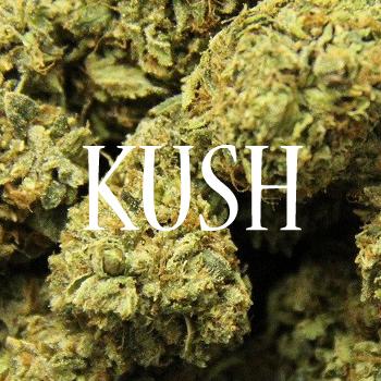 Les Meilleures Kush