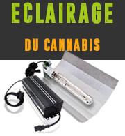 L'eclairage du Cannabis