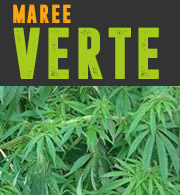 Culture du Cannabis en Maree Verte