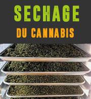 Sechage du cannabis