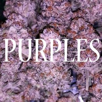 Varietes Purple