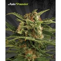 Auto Pounder