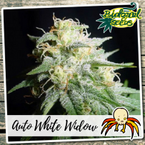 Auto White Widow Bio