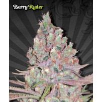 Berry Ryder