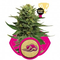 Blue Mystic Royal Queen Seeds