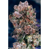Blueberry de Dutch Passion