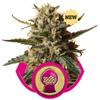 Bubblegum XL Royal Queen Seeds