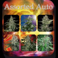 Buddha Seeds Mix de Graines Autofloraison