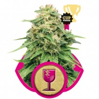 Critical de Royal Queen Seeds