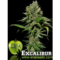 Excalibur Eva Seeds