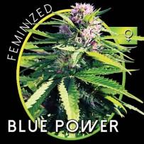 Graines de Blue Power