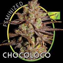 Graines de Chocoloco