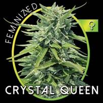 Graines de Crystal Queen
