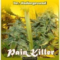 Painkiller   Graines Dr Underground