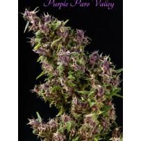 Graines de Purple Paro Valley