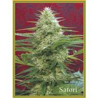 Graines de Satori