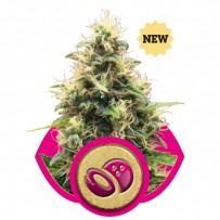 Somango XL de Royal Queen Seeds