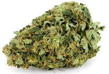 Cannabis Kush