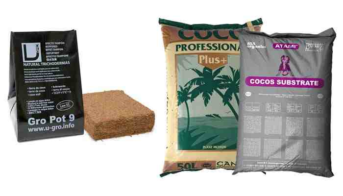Culture du Cannabis en Coco