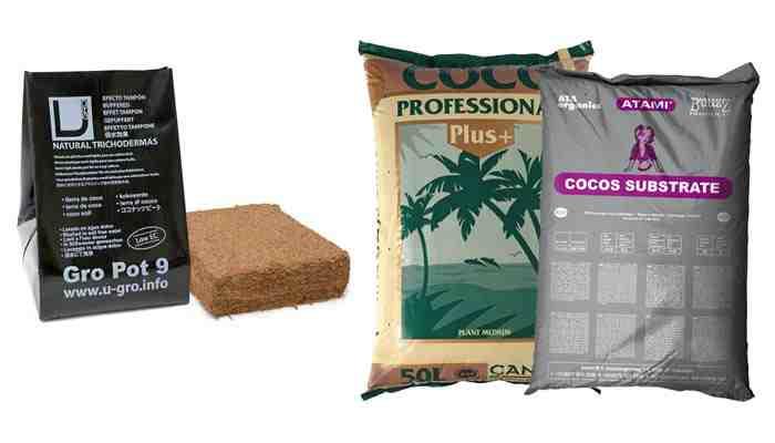 Culture du Cannabis en Coco