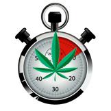 Graines de Cannabis Floraison Rapide