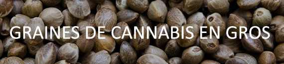 Graines de Cannabis En Gros