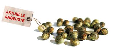 graines-de-cannabis-pas-cher