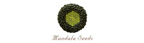 Graines Mandala Seeds