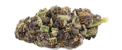 variétés de cannabis Purple